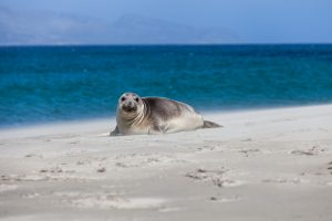 image of seal on beach