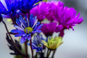 image of blue and purple flowers